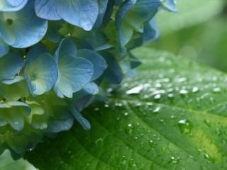 梅雨 写真.jpg